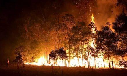 社会|《澳洲山火》文章大爆的背后,存在怎样的问题?