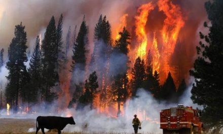 担心!虽然加州的逐渐解封,仍充斥动荡,山火千万不要来凑热闹!