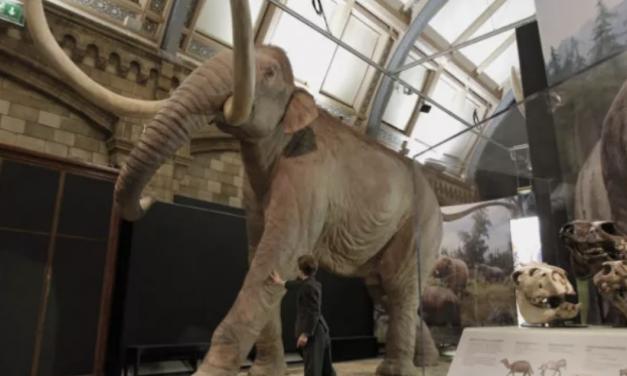冰河世纪重现?哈佛学者称已灭绝的猛犸象复活不是梦!